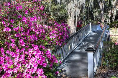Photograph - Spring At Magnolia Plantation 4 by Walt  Baker