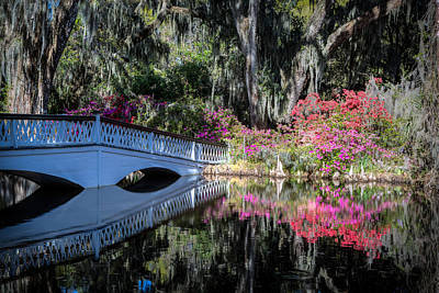 Photograph - Spring At Magnolia Plantation 5 by Walt  Baker