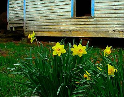 Daffodyls Photograph - Spring At The Old Home Place by Julie Dant