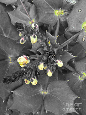 Photograph - Spring Awakening by Eva-Maria Di Bella