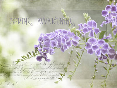 Photograph - Spring Awakening by Julie Palencia