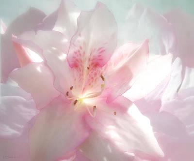 Spring Azalea Glow Art Print by Deborah Smith