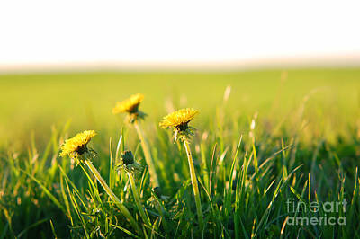 Countryside Photograph - Spring Background by Michal Bednarek