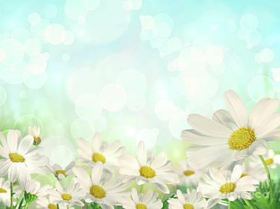Spring Background With Daisies Art Print by Sandra Cunningham