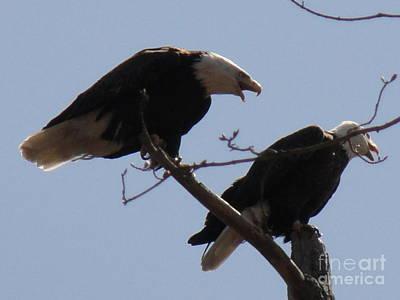 Photograph - Spring Bald Eagles 2013 Ix by Daniel Henning