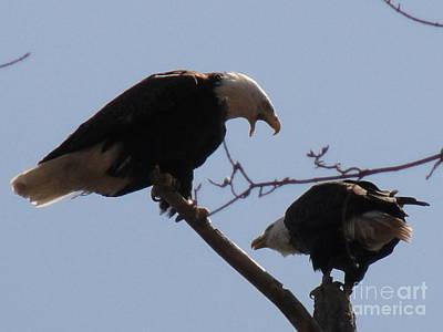 Photograph - Spring Bald Eagles 2013 Viii by Daniel Henning