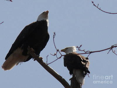 Photograph - Spring Bald Eagles 2013 X by Daniel Henning
