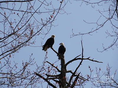 Photograph - Spring Bald Eagles 2013 Xvii by Daniel Henning