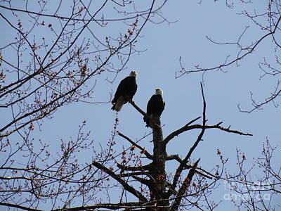 Photograph - Spring Bald Eagles 2013 Xviii by Daniel Henning