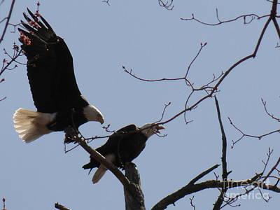 Photograph - Spring Bald Eagles 2013 Xxii by Daniel Henning