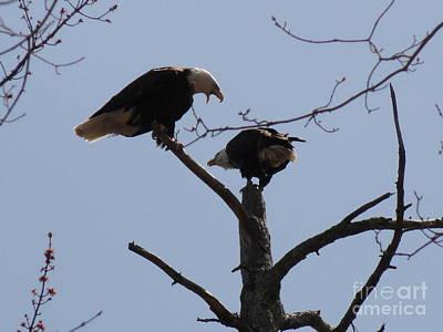 Photograph - Spring Bald Eagles 2013 Xxiv by Daniel Henning