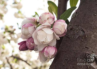 Priska Wettstein Pink Hues - Spring Beauty by Arlene Carmel