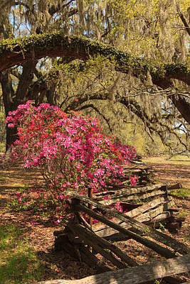 Print featuring the photograph Spring Beauty by Patricia Schaefer