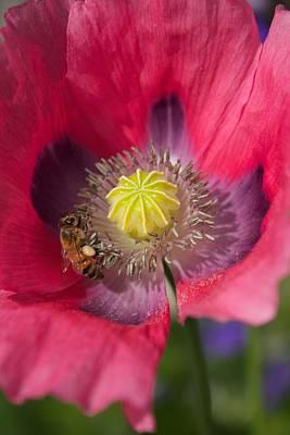 Spring Bees Print by Bonita Hensley