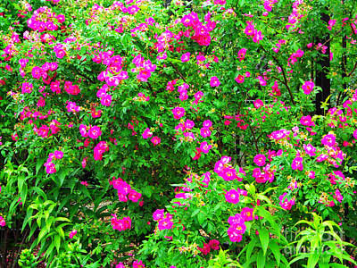 Audrey Hepburn - Spring Blooms by Gary Richards