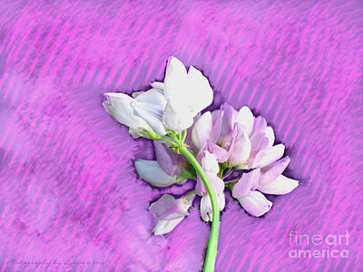 Photograph - Spring Blossom by Gena Weiser