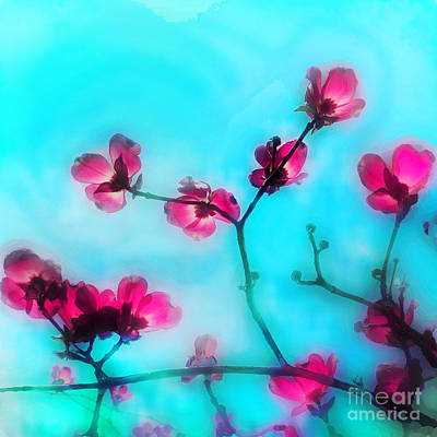 Photograph - Spring Blossom by Gina Signore