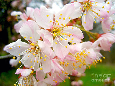 Photograph - Spring Blossom by Nina Ficur Feenan