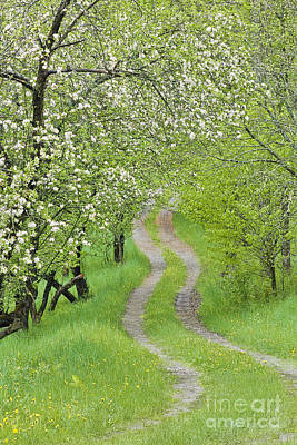 Photograph - Spring Blossom Road by Alan L Graham