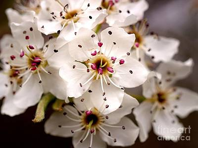 Photograph - Spring Blossoms 1 by Brett Winn