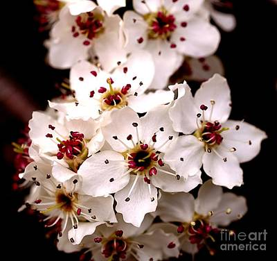 Photograph - Spring Blossoms 2 by Brett Winn