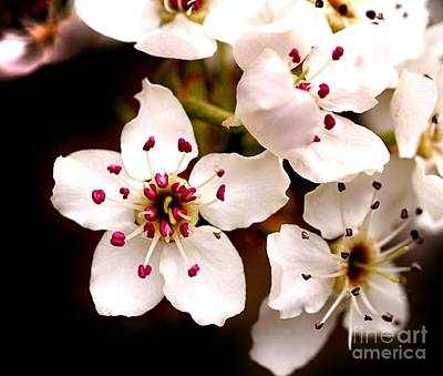 Photograph - Spring Blossoms 3 by Brett Winn