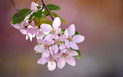 Photograph - Spring Blossoms by AJ  Schibig