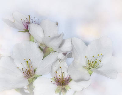 Photograph - Spring Blossoms by David and Carol Kelly