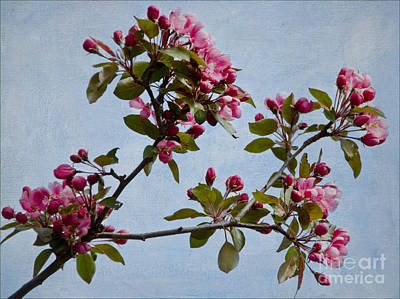Photograph - Spring Blossoms by Gerda Grice