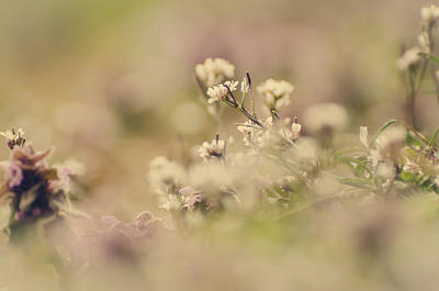 Photograph - Spring Blossoms by Heather Applegate