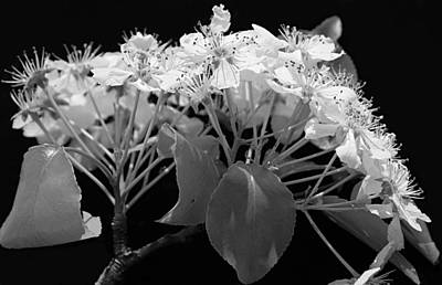 Photograph - Spring Blossoms by Kume Bryant
