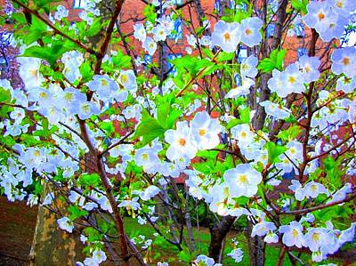 Digital Art - 'spring Blossoms' by Liza Dey