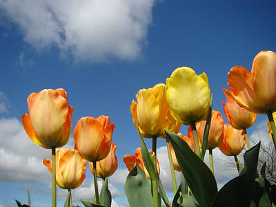 Spring Blue Sky White Clouds Orange Tulip Flowers Art Print by Baslee Troutman