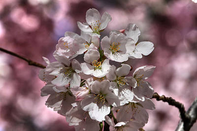 Photograph - Spring Bouqet by Donna Kennedy