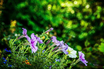 Photograph - Flowers - Floral - Spring Bouquet  by Barry Jones