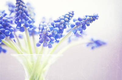 Blue Grapes Photograph - Spring Bouquet by Carolyn Cochrane