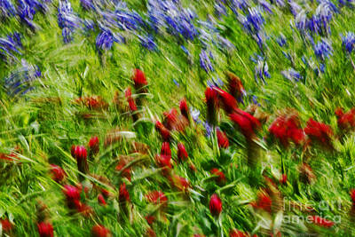 Crimson Clover Photograph - Spring Breeze by Lisa Holmgreen