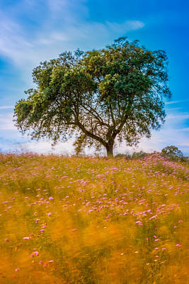Photograph - Spring Breeze by Mark Robert Rogers