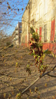 Photograph - Spring Buds And Urban Decay 1 by Anita Burgermeister