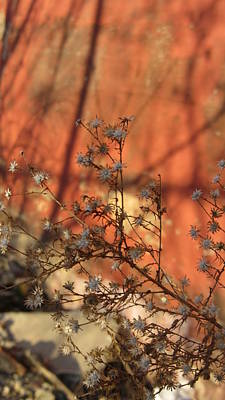 Photograph - Spring Buds And Urban Decay 4 by Anita Burgermeister