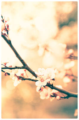 Photograph - Spring Buds by Lenny Carter