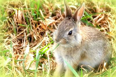 Photograph - Spring Bunny by Diane Alexander