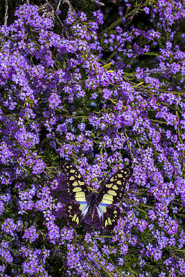 Spring Butterfly Art Print by Garry Gay
