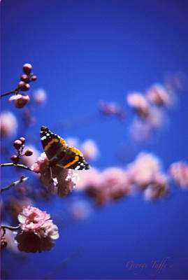 Photograph - Spring Butterfly by George Tuffy