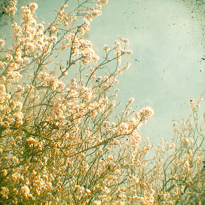 Cassia Blossoms Photograph - Spring by Cassia Beck