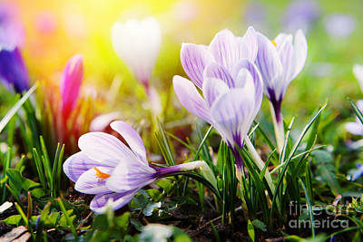 Art Print featuring the photograph Spring by Christine Sponchia