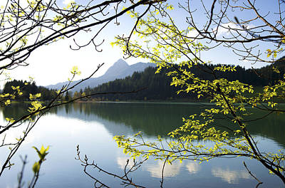 Photograph - Spring Colors Bright Green Leaves And Light Blue Lake by Matthias Hauser