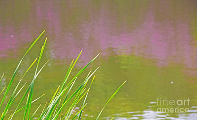 Photograph - Spring Colors by Charline Xia