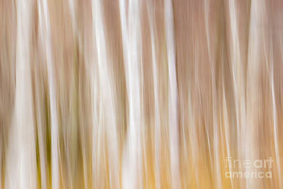 Photograph - Spring Colors by Karin Pinkham