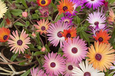 Photograph - Spring Colors by Masami Iida